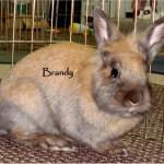 adopted jan 2011