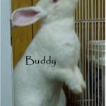 Buddy investigates