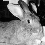 bunny billboard