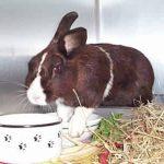 bunny diet, feeding a bunny, feeding a rabbit