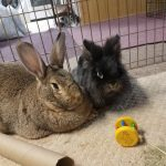 bunnies are compatible with other bunnies. Bunny mating